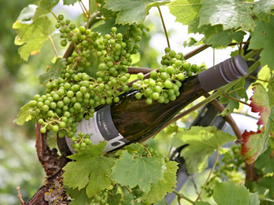 riesling-hillabrand